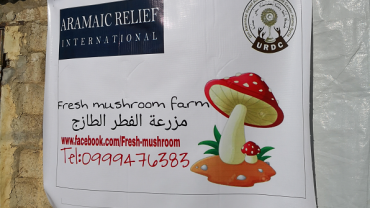 "Champignons-Zuchtfarm ""Fresh Mushroom Farm"" in Al-Hafar, Syrien"